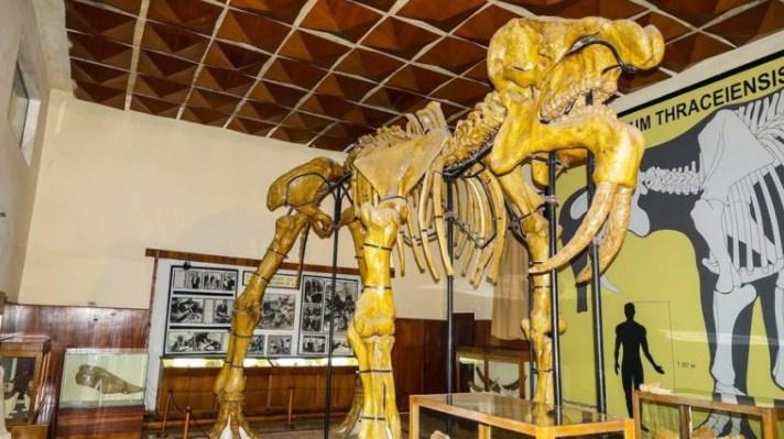 Палеонтологичният музей